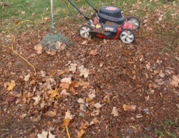 A huge pile of leaves chopped down to just a small pile that will be raked into the lawn to feed the soil.