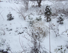 the benefits of leaving clean up until spring.  Interesting stems and seed heads to decorate the snow.